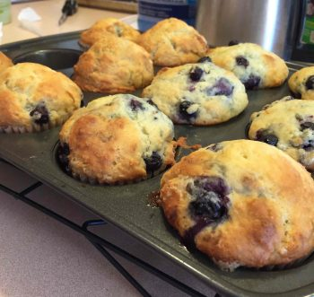 Blueberry muffins fresh from the oven and still in muffin pan made with Classic Homestyle Muffin Mix